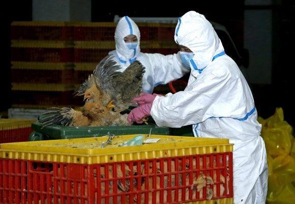 Pessoal do Instituto para os Assuntos Cívicos e Municipais (IACM) procede a medidas de prevenção e controlo do vírus da gripe das aves no Mercado Abastecedor Nam Yue